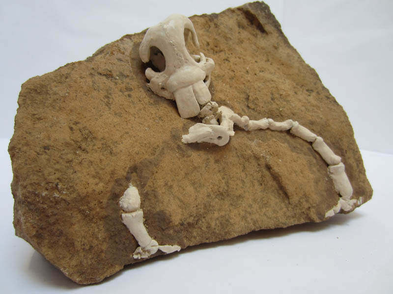 Fictional Fossil